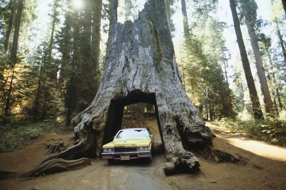 "The Family Acid<br /> <em>Sequoia Garage, October 1988</em><br /> Archival pigment ink prints<br /> 16 x 20""    Edition of 8"