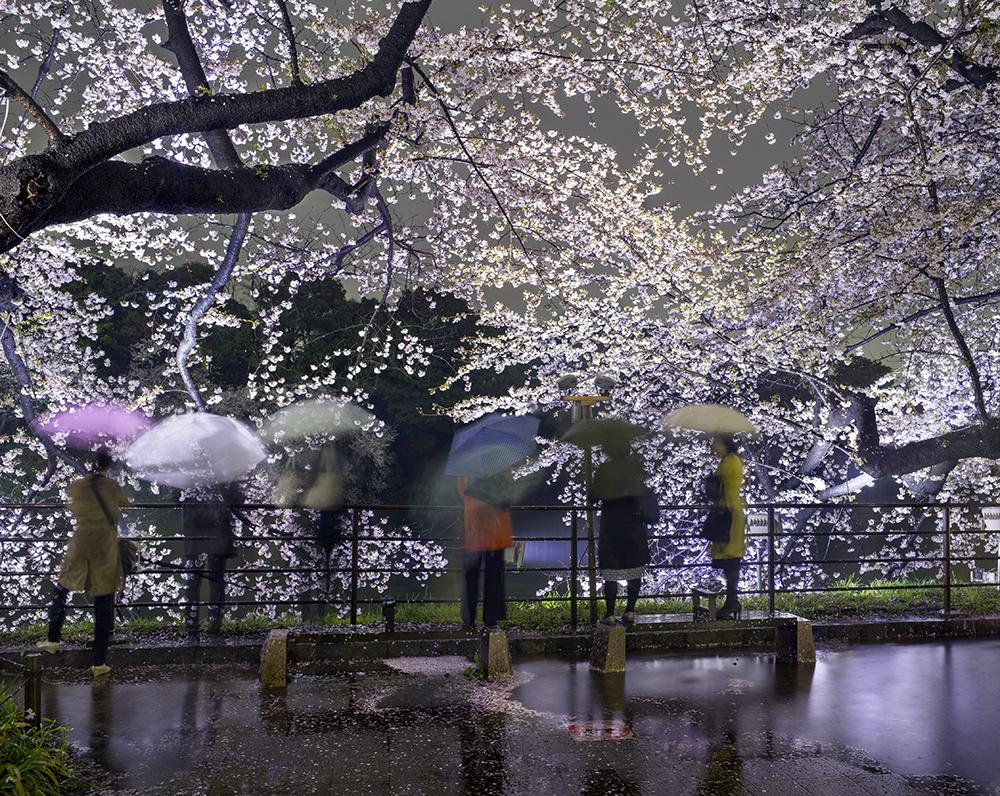 "Matthew Pillsbury<br /> <em>Hanami #5, Chidorigafuchi, Thursday April 3rd, 2014</em> (TV14605)<br /> Archival pigment ink print<br /> 20 x 24""    Edition of 10<br /> 30 x 40""    Edition of 6 (plus 2 APs)<br /> 50 x 60""    Edition of 2 (plus 1 AP)"