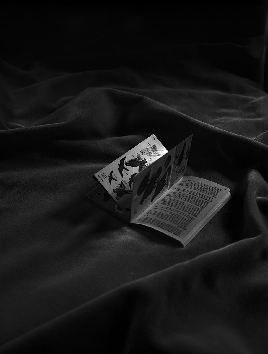 """Regina DeLuise<br /> <em>Bird Book</em><br /> Platinum-palladium print on rice paper<br /> 10 x 8""""  Edition of 30"""