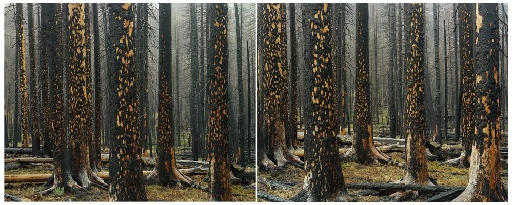 "Laura McPhee<br /> <em>Early Spring (Peeling Bark in Rain), </em>2008<br /> Digital chromogenic print<br /> 30 x 40""  Edition of 5<br /> 40 x 50""  Edition of 5<br /> 50 x 60""  Edition of 5"