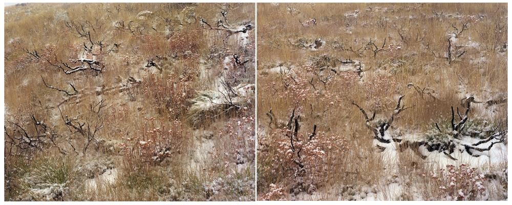 "Laura McPhee<br /> <em>Late Fall (Burned Sage Brush), </em>2008<br /> Digital chromogenic print<br /> 30 x 40""  Edition of 5<br /> 40 x 50""  Edition of 5<br /> 50 x 60""  Edition of 5"