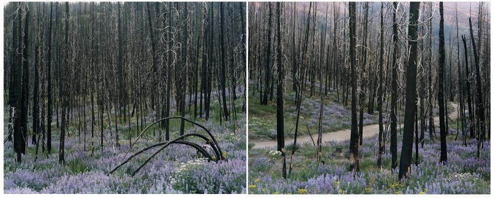 "Laura McPhee<br /> <em>Midsummer (Fisher Creek Road), </em>2008<br /> Digital chromogenic print<br /> 30 x 40""  Edition of 5<br /> 40 x 50""  Edition of 5<br /> 50 x 60""  Edition of 5"