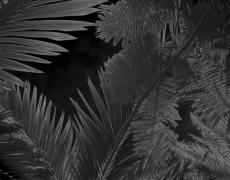 """Karine Laval<br /> <em>Untitled # 4</em>from the <em>Black Palms</em>Series, 2014<br /> Chromogenic print<br /> 50 x 40""""  Edition of 5<br />"""