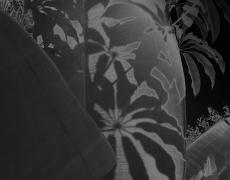 """Karine Laval<br /> <em>Untitled # 7</em>from the <em>Black Palms</em>Series, 2014<br /> Chromogenic print<br /> 50 x 40""""  Edition of 5<br />"""
