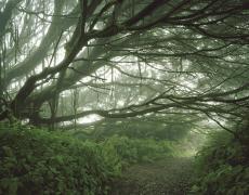 "Simon Norfolk<br /> <em>Mist shrouded trees, Ascension Island, </em>2003<br /> Digital chromogenic prints<br /> 20 x 24""  Edition of 10 (plus 3 APs)<br /> 40 x 50""  Edition of 10 (plus 3 APs)"