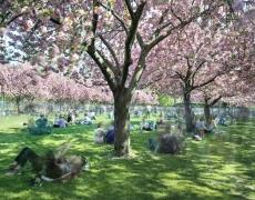 "Matthew Pillsbury<br /> <i>Hanami #28, Brooklyn Botanic Garden</i>, 2016(TV160028)<br /> Archival pigment print<br /> 20 x 24""  Edition of 10<br /> 30 x 40""  Edition of 6 (plus 2 APs)<br /> 50 x 60""  Edition of 2 (plus 1 AP)"