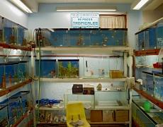 """Jeffrey Milstein<br /> <em>Tropical Fish Store, Havana, Cuba, </em>2004<br /> Archival pigment prints<br /> 16 x 24""""  Edition of 15<br /> 22 x 33""""  Edition of 5"""