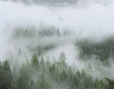 """Christopher Woodcock<br /> <em>Clearing Fog, Old Growth Forest, Angelo Coast Range Reserve, </em>2013<br /> Digital C-Prints<br /> 30 x 40""""  Edition of 10<br /> 40 x 50""""  Edition of 6<br />"""