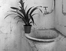 "Regina DeLuise<br /> <em>Balancing Plant</em><br /> Platinum-palladium print on rice paper<br /> 10 x 8""  Edition of 30"
